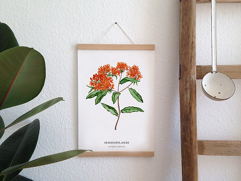 "Botanik Kunstdruck ""Seidenpflanze"""