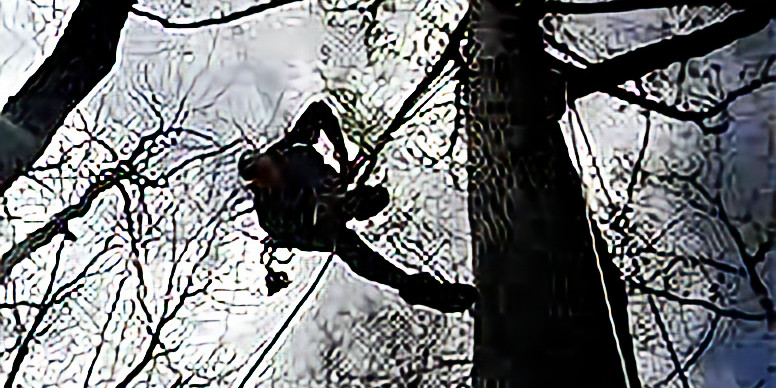 Friends in high places TREE climbing adventure