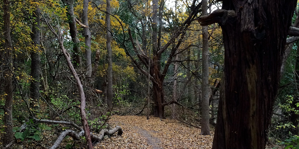 Barton Creek Green Belt exploration and scavenger hunt
