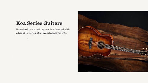 MUSICIANS 1ST CHOICE TAYLOR KOA SERIES GUITARS