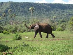 Tanzania5-1024x768