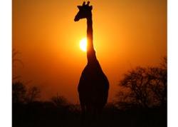 Africa2-1024x732