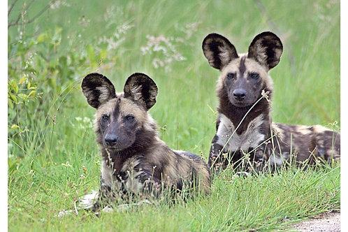Deposit for Zimbabwe conservation Safari