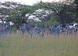 Africa5-1024x732