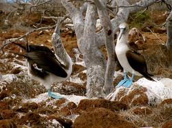 blue fb seymour island