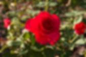 IMG_7925 copy_edited.jpg