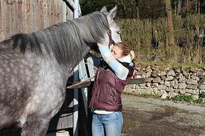 Behandlung eines Pferdes - Physiotherapie kann bei unterschiedlichen Beschwerden heilend wirken.