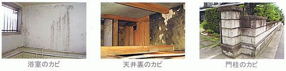 浴室カビ、天井裏のカビ、門柱のカビ