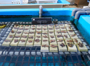Baby coral Nursery school –Dec.
