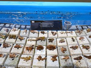 Baby coral Nursery school –May