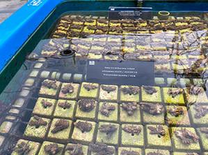 Baby coral Nursery school –Jan.