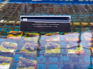 Baby coral Nursery school –Aug.