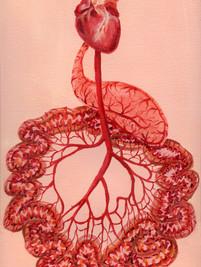 Giant Panda Heart and Intestine Sketch