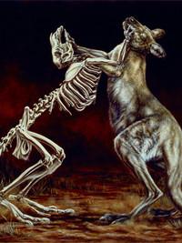 Macropus rufogriseus: Fighting Red-Necked Wallabies