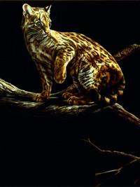 Memento mori: Ocelot and ocelot skeleton