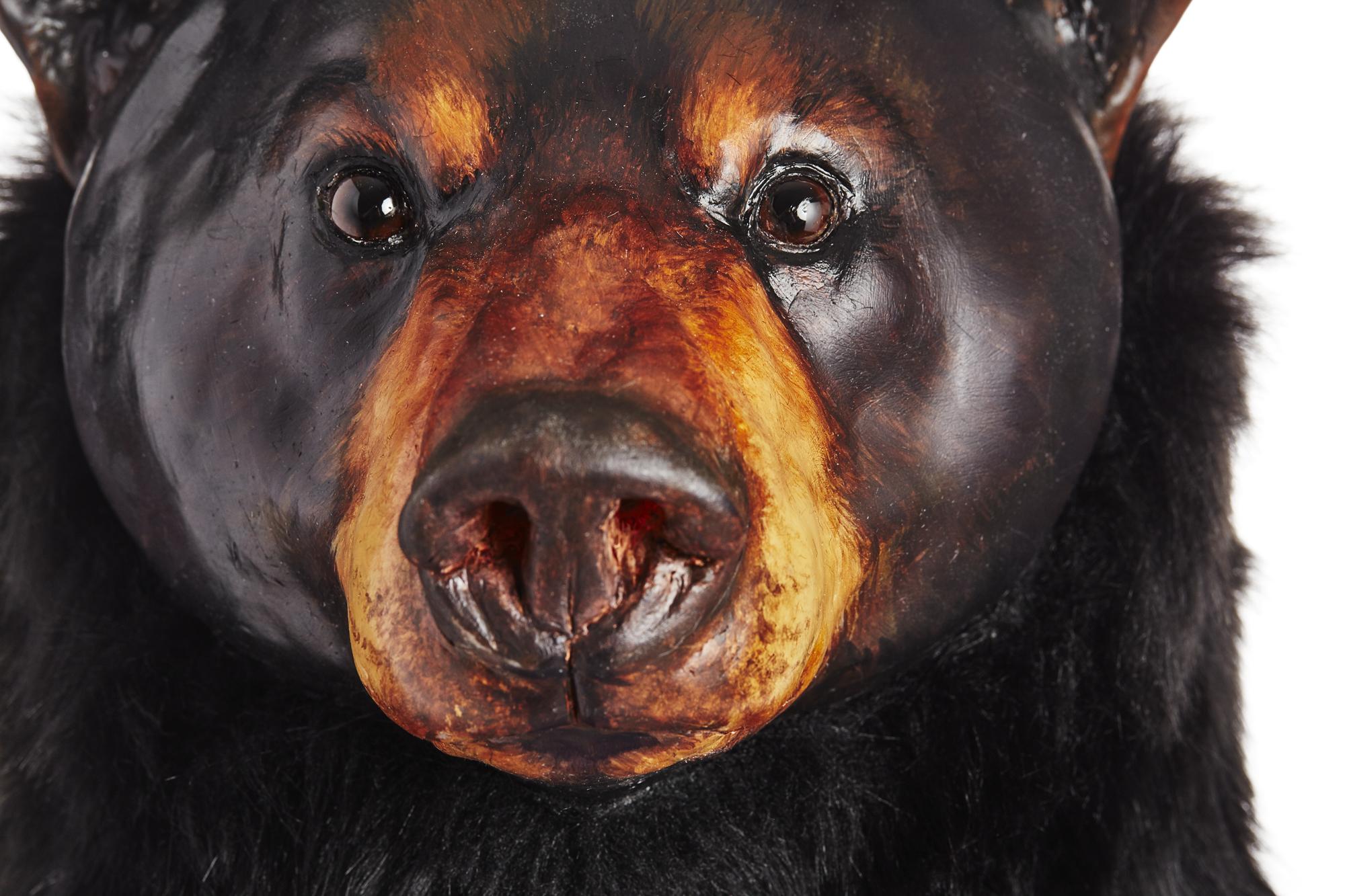 Ursus americanus, Standing