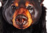 Ursus americanus: Standing