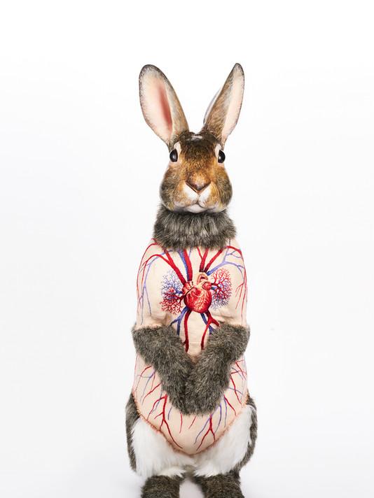 Flayed Rabbits