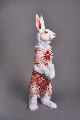 Flayed Rabbit: Albino with Cells