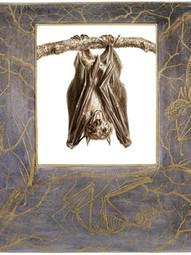 Egyptian Rousette (fruit bat)