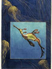 Weedy Seadragon and Jellyfish