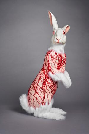 Flayed Rabbit: Albino with Nerves