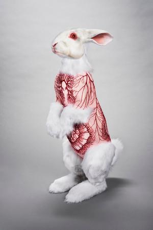 Flayed Rabbit: Albino