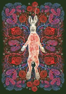 Rabbit Kami: Illuminated Border with Doll Insert