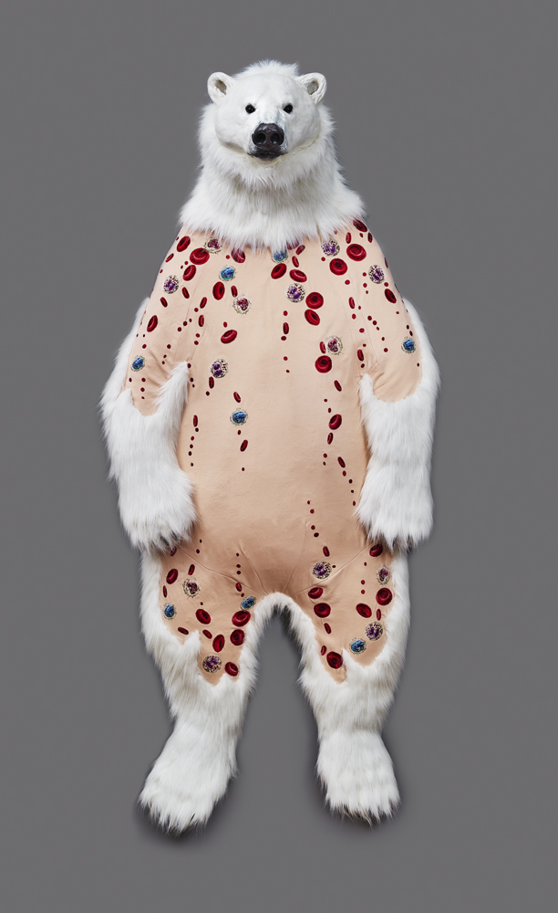 Ursus maritimus Skin: Blood Cells