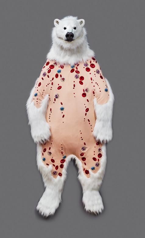 Ursus maritimus Skin: Blood Cells