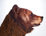 Ursus arctos horribilus