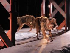 Coyote Pursues