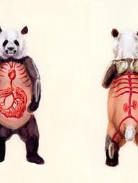 Giant Panda Sketch
