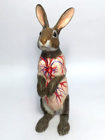Flayed Rabbit: Cottontail maquette