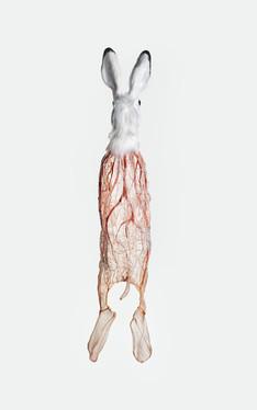 Rabbit Kami: Nerves
