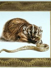 Badger and Rattlesnake