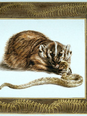 Badger and Rattlesnake
