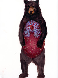 Standing Black Bear Sketch