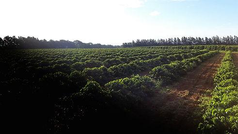 café canastra fazenda