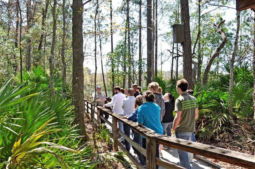A large group being shown a tour on the UNF nature trails.
