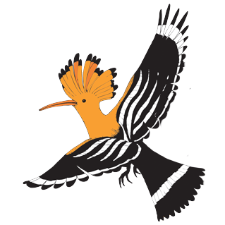 hoopoe copy.png
