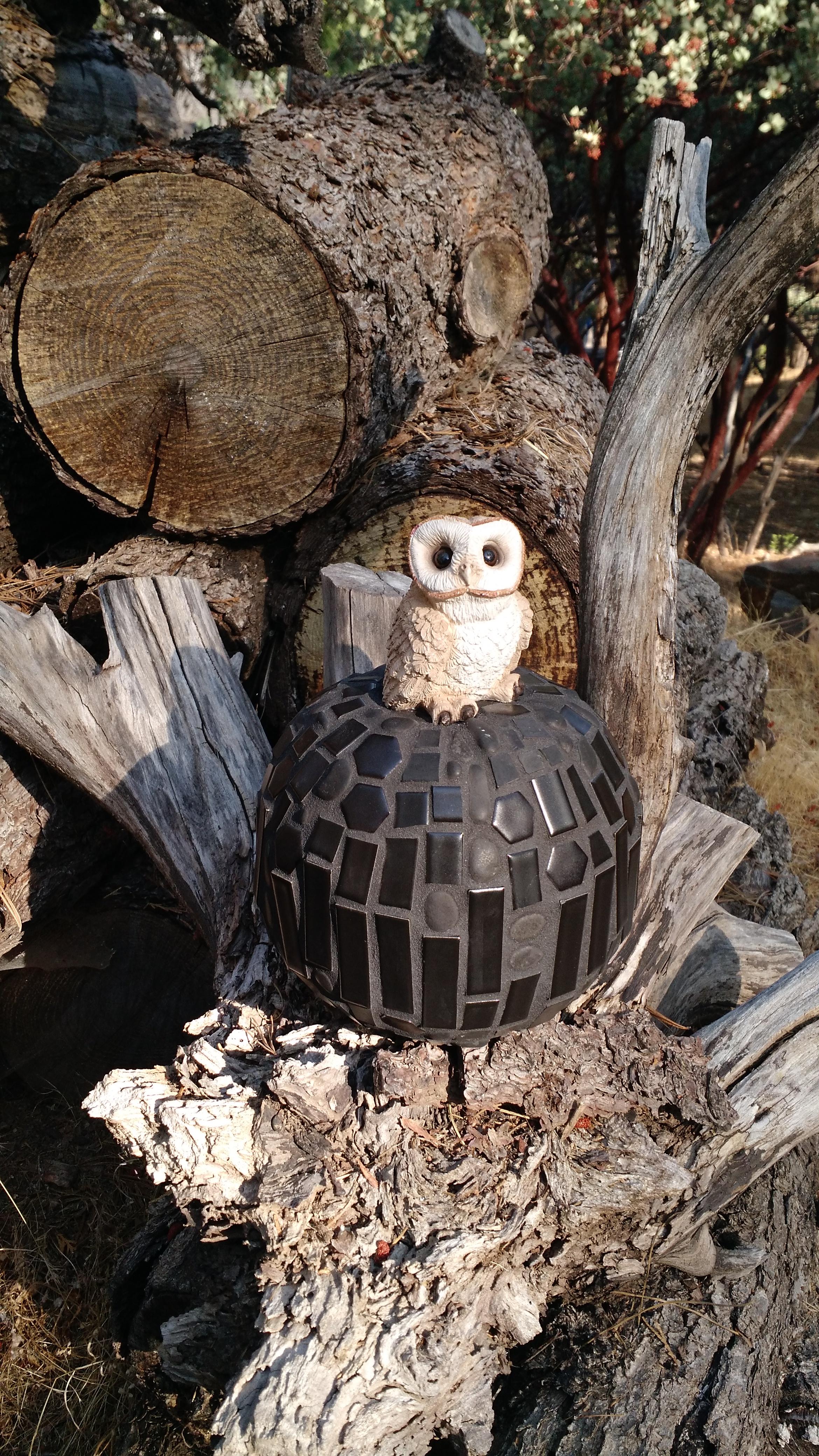 BlackPumpkinOwl