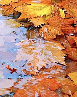 An Autumnal Lesson