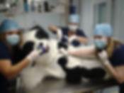 San Juan Animal Hospital surgical suite
