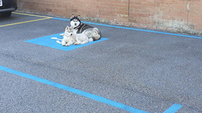 Disabled Bays?....Check! Husky Approved?....Check!