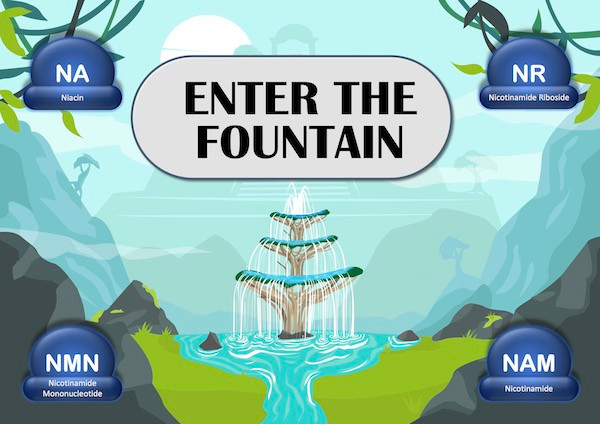 Enter the Fountain of Youth