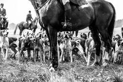 Pferdeboxen Dorfmark