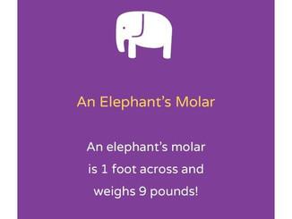 Fun Dental Fact Of The Day!