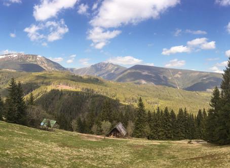 Die Bergnatur erwacht | The mountain-nature is awakening