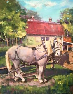 Kensington Draft Horse